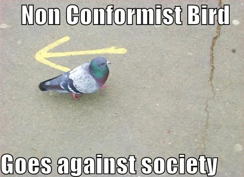 2013-06-04 Nonconformist Bird