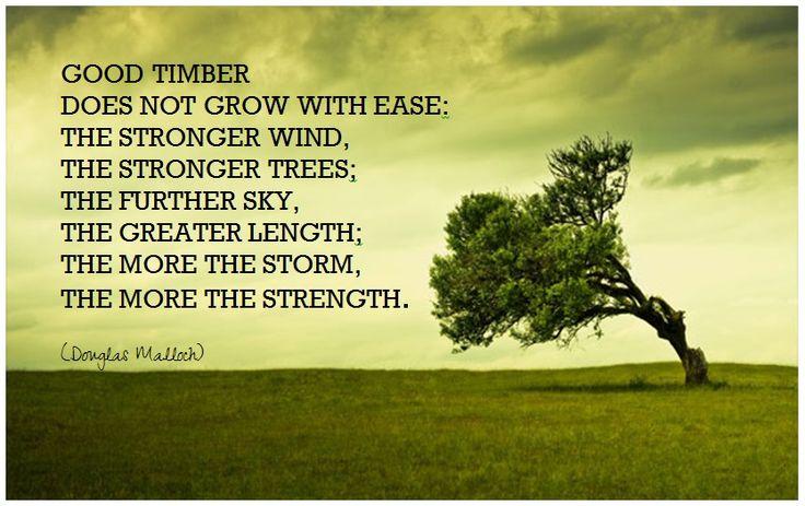 754 - Good Timber